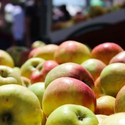 Photo of Apples on Display in Hendersonville