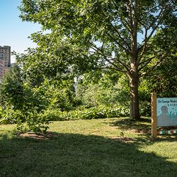 photo of edible park in Asheville NC overlooking historic downtown buildings