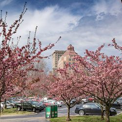 photo of blooming trees in foreground and Asheville city building in background