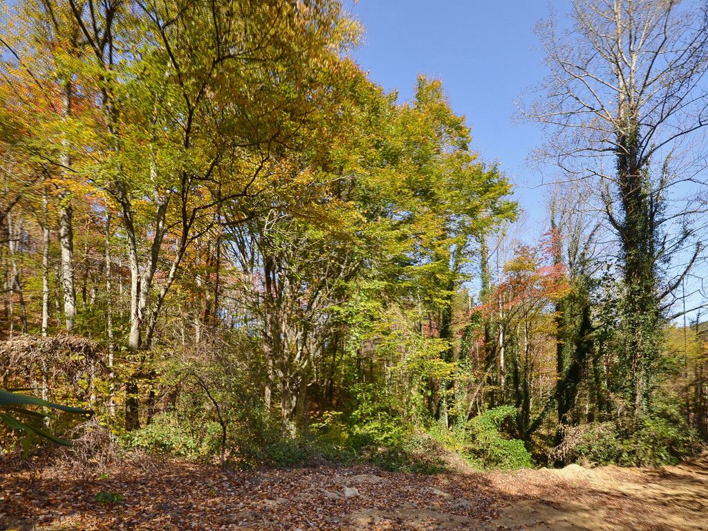 00 Morgan Hill Road in Black Mountain, North Carolina 28711 - MLS# 3226909