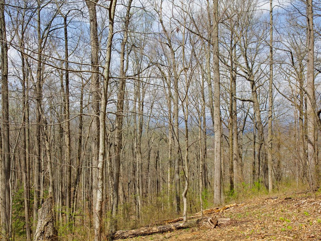 99999 Old Forest Drive #LOT 3C in Asheville, North Carolina 28803 - MLS# 3232225