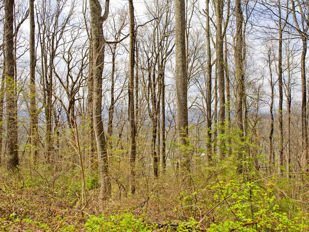 99999 Old Forest Drive #LOT 1C in Asheville, North Carolina 28803 - MLS# 3232242
