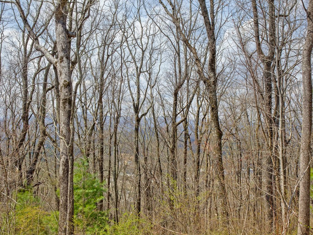 138 Old Forest Drive #Lot 7 in Asheville, North Carolina 28803 - MLS# 3232253