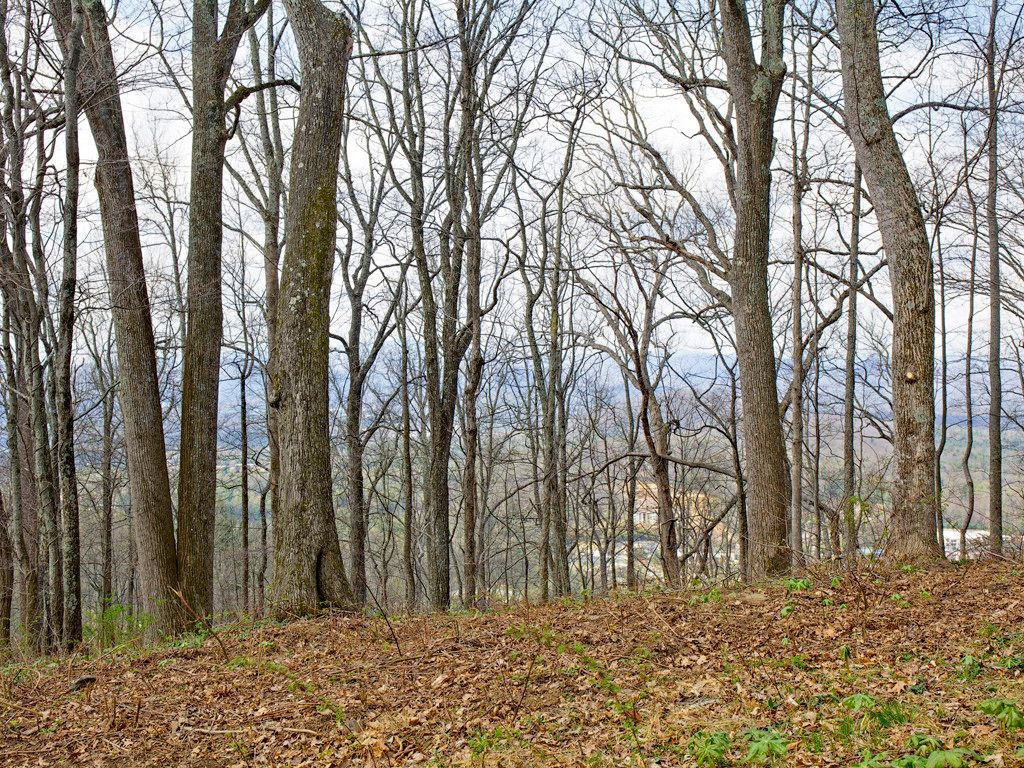 99999 Old Forest Drive #Lot 3 in Asheville, North Carolina 28803 - MLS# 3232297