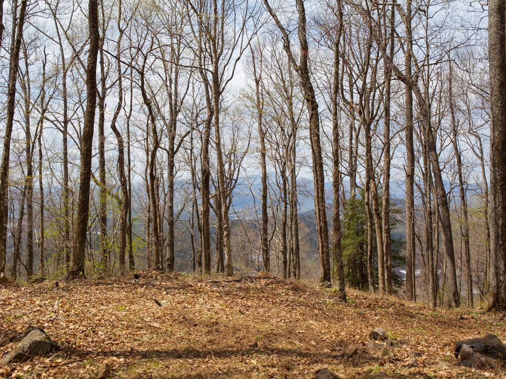 99999 Old Forest Drive #Lot 2C in Asheville, North Carolina 28803 - MLS# 3232427