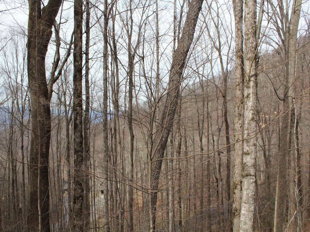 Lot 17 St Andrews Road in Waynesville, North Carolina 28786 - MLS# 3255163