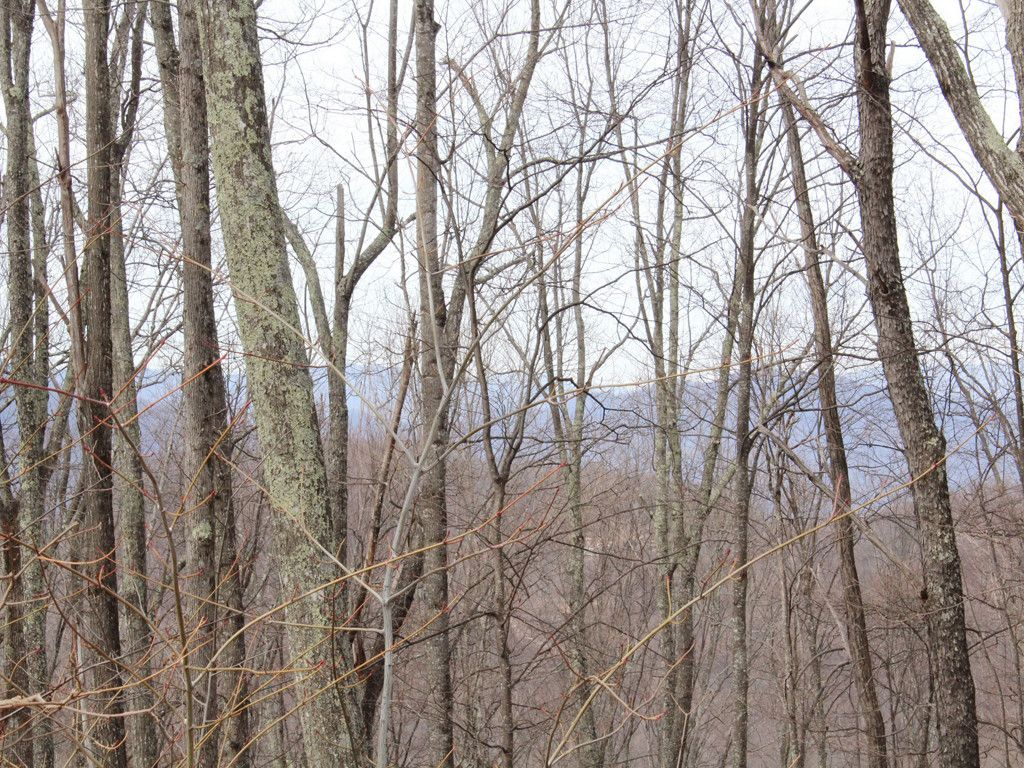 Lot 14 Balvenie Drive in Waynesville, North Carolina 28786 - MLS# 3255166