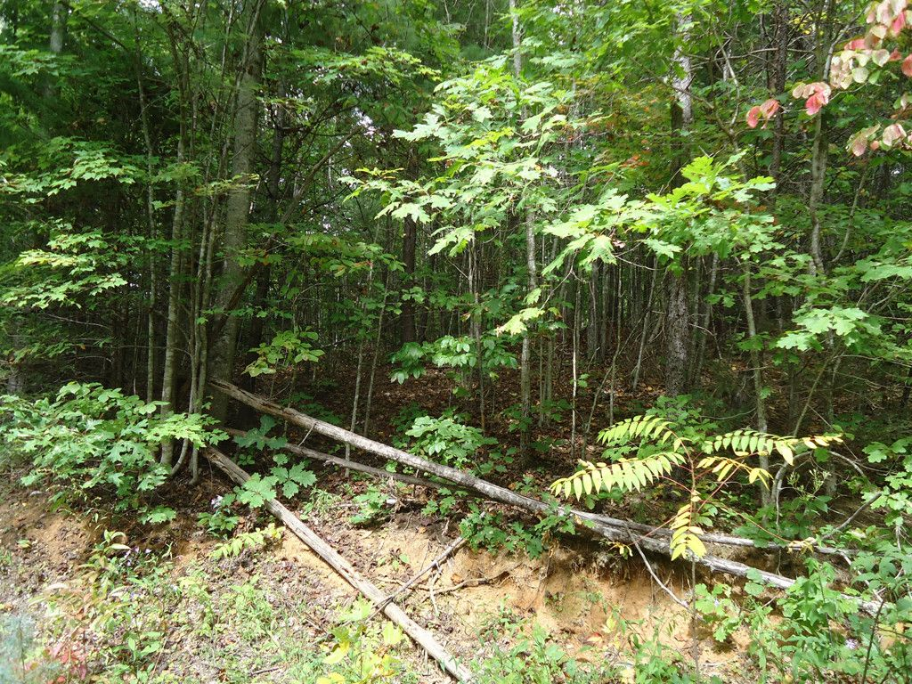 Lot 143 Yosemite Falls Trail in Black Mountain, North Carolina 28711 - MLS# 3268011