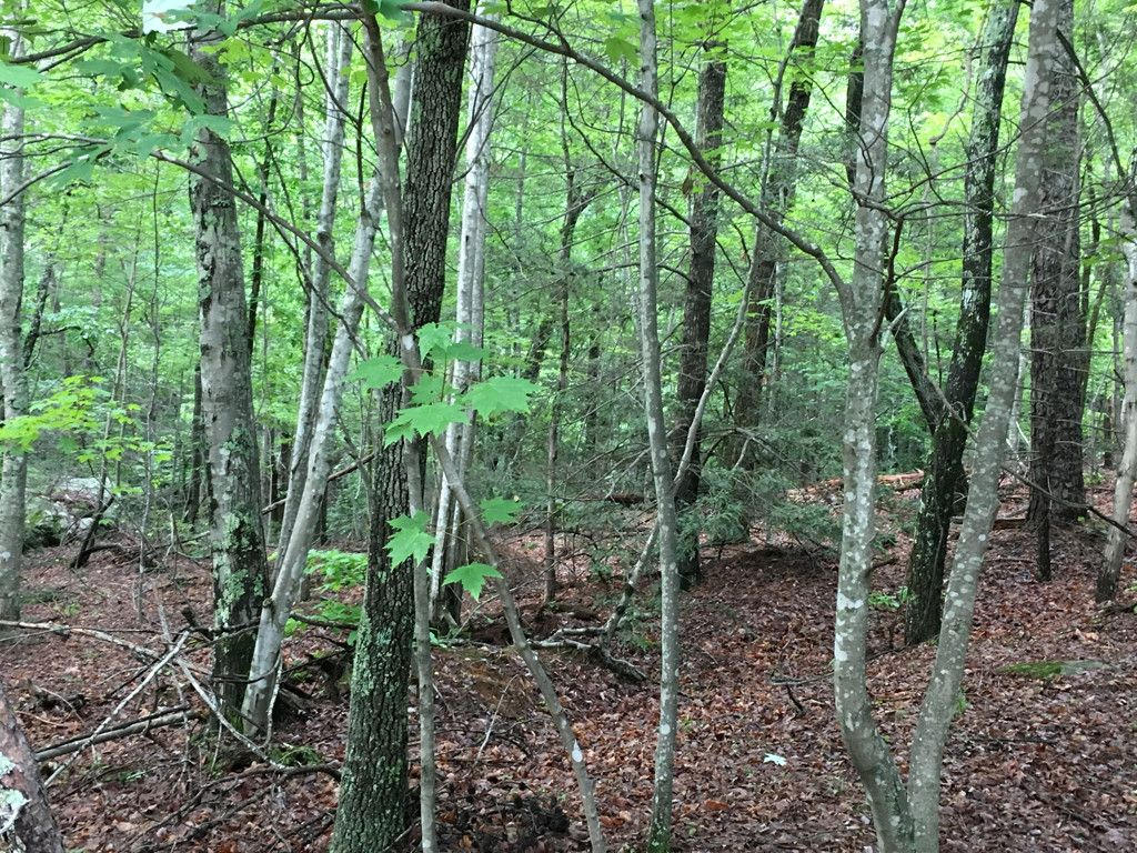 Lot 239 Quail Ridge Road #239 in Lake Lure, North Carolina 28746 - MLS# 3286365