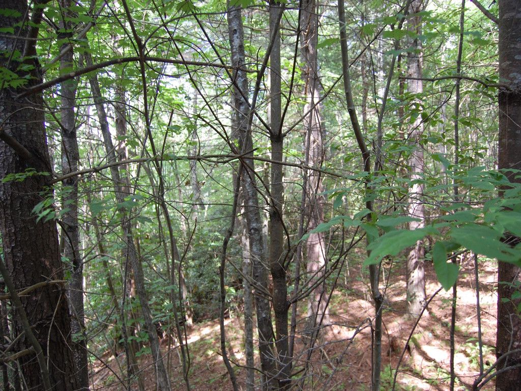 Lot #5 Thomas Road in Hendersonville, North Carolina 28739 - MLS# 3315087