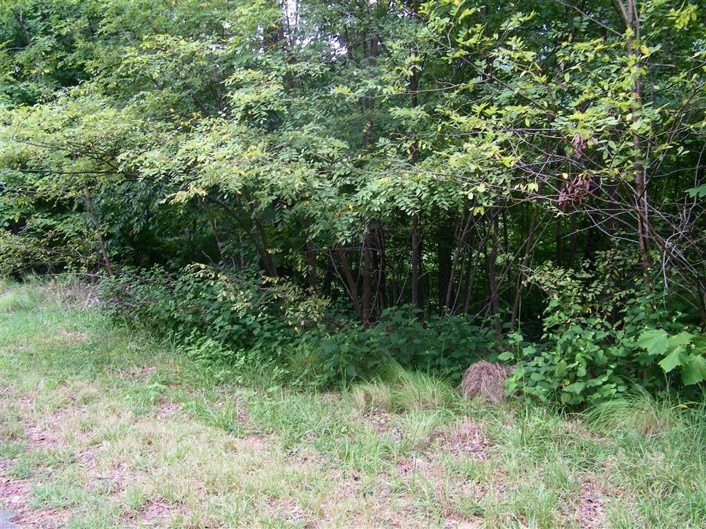 Lot 41 Hawks Nest Trail in Lake Lure, North Carolina 28746 - MLS# 3327706