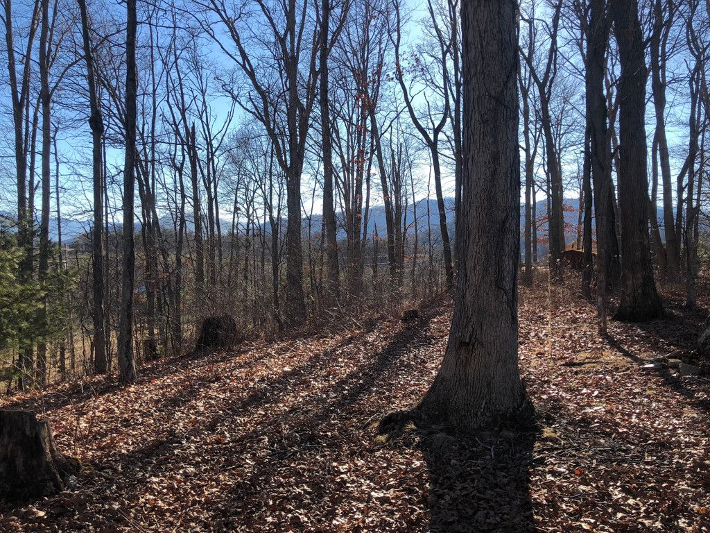 0 Blueberry Hill Drive #0 in Clyde, North Carolina 28721 - MLS# 3358723