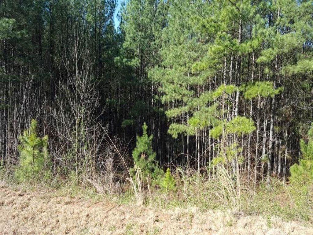 00 Sunset Drive #19 in Rutherfordton, North Carolina 28139 - MLS# 3365413