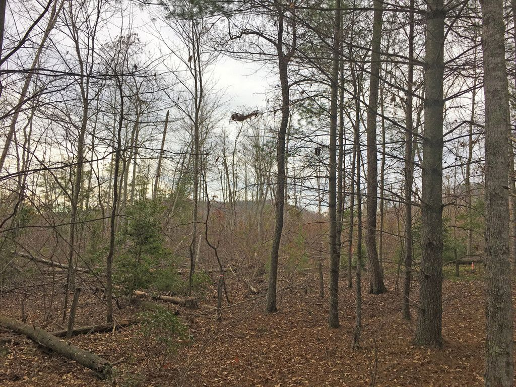 Lot 284 Trillium Trail in Nebo, North Carolina 28761 - MLS# 3371273