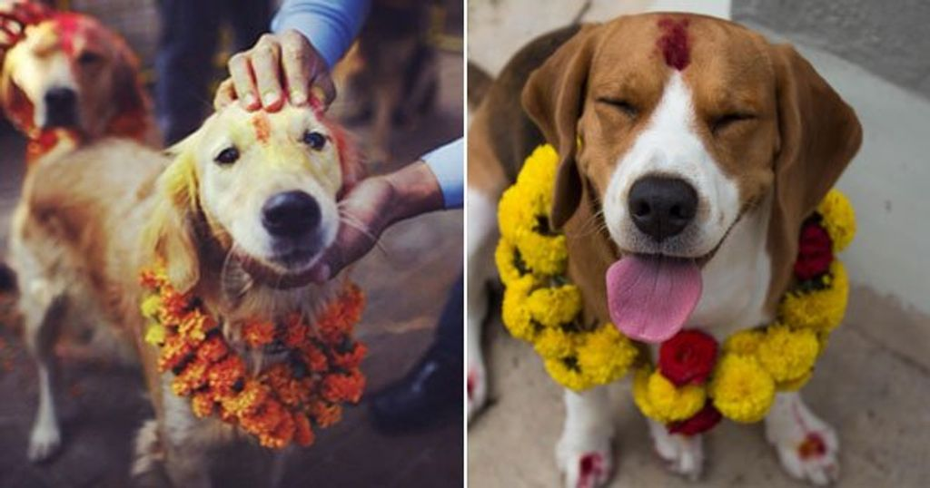 Every Year Nepal Celebrates A Festival Dedicated To Worshipping Dogs & It's Beautiful