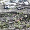 Ветерот во Скопје бутна дрвја и оштети неколку лимени покриви