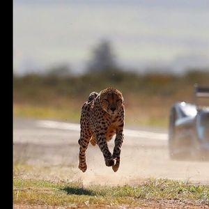 Кој е побрз – Гепард или Формула Е болид?