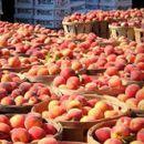 Русија најави забрана на увозот на праски од Македонија од 15 август