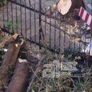 Кривична пријава за двајца кичевци за бесправна сеча на дрва