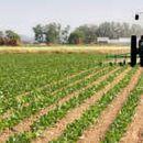 СДСМ: ВМРО-ДПМНЕ нема кредибилитет да зборува за земјоделците кои 10 години ги потценуваше