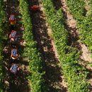 """""""Напредни лозари"""" бара итно донесување на закон за лозарство и грозје"""