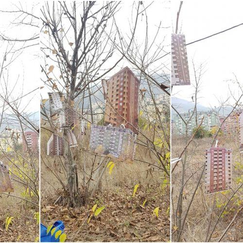 Герила акција: Дрвата во Расадник родија згради