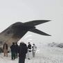 Организаторот на убиството на Сулејмани меѓу жртвите на соборениот авион во Авганистан