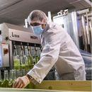 Недостиг на алкохол и дезинфекциски средства во Швајцарија