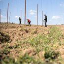 Над 65.000 земјоделци поднеле барања за субвенции
