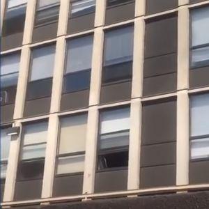 Мачка скокна од петти кат за да се спаси од пожар, доскокот за највисока оценка