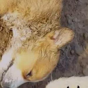 ВОЗНЕМИРУВАЧКО ВИДЕО: Ужасни маки на кучиња во српски стационар, си ги јадат сопствените малечки