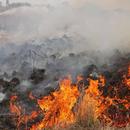 Големи пожари во делови на Албанија