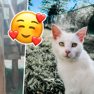 Pregnant Woman Remarkably Finds The Sweetest Pregnancy Buddy – A Pregnant Stray Cat!