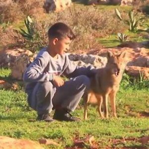 Дете припитомило волк, сега заедно ги чуваат овците (ВИДЕО)