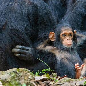Финалистите од најсмешните фотографии од животинскиот свет за 2019-та