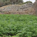 Protecting farmers' rights – Alex Agius Saliba