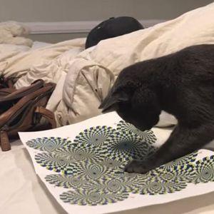 Како мачката реагира на оптичка илузија?