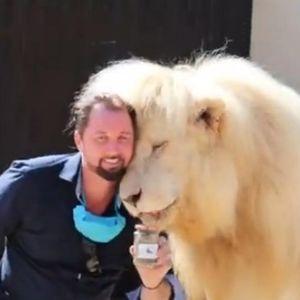 Продаваат измет од лав, чини 5 евра, но бизнисот им цути
