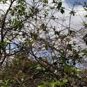 Тревожна природна поличба се появи в наше село СНИМКИ