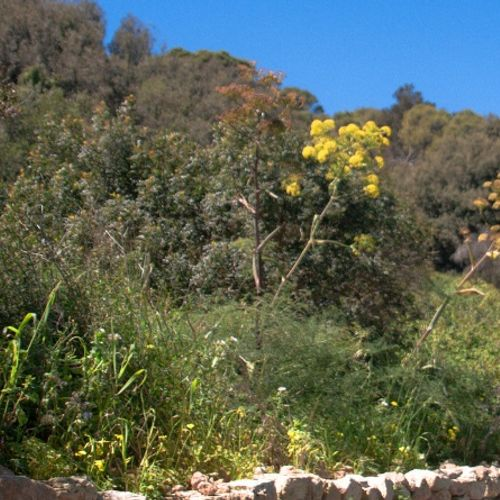 Project to control species invading Malta's and Sicily's biodiversity kicks off