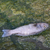 'Just Horrible': US Chemical Spill Leaves Beaches Closed, Hundreds of Fish Dead (Photos)