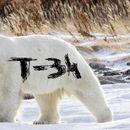 """По руската тундра се движи бела мечка на чие крзно некој напишал """"Т-34"""" (ВИДЕО)"""