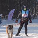 Во градот Бердск кај Новосибирск одржани трки на кучешки запреги (ВИДЕО)