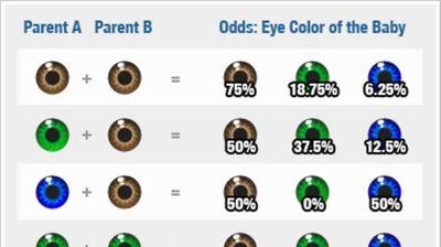 ГЕНЕТИКА: Откријте каква боја ќе бидат очите на вашето бебе?