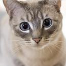 Мачка спаси маж кој пропаднал во канал, градот и издаде пофалница