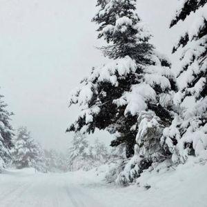 И ова е можно: 17cm снег падна во јуни и ги изненади сите