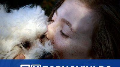 Собствениците на кучета живеят по-дълго