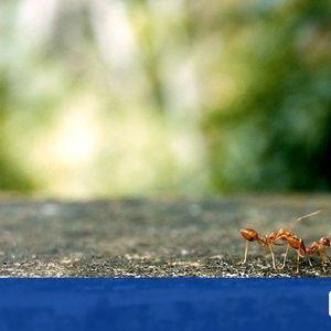 Превръщат ли се насекомите в храната на бъдещето?