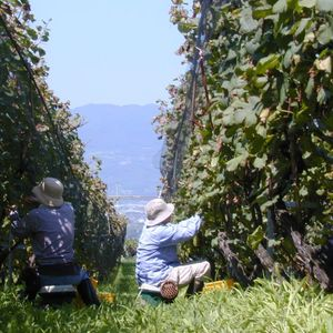 Japan Is About to Become the Newest 'It' Region for Wine