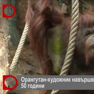 Френски орангутан рисува за пари